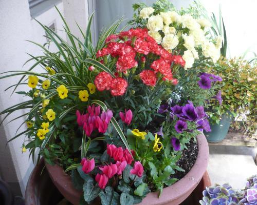 岡山の特別養護老人ホーム【愛光苑】玄関は花でいっぱい1