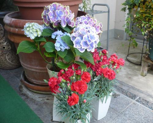 岡山の特別養護老人ホーム【愛光苑】玄関は花でいっぱい2